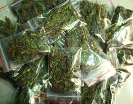 Hà Nội: Tự trồng cần sa, rao bán trên mạng xã hội