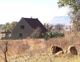 Trả cả triệu đồng mỗi đêm để được ngủ với sư tử