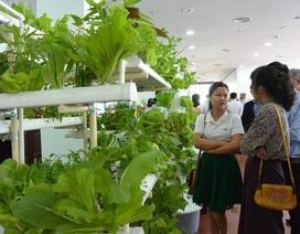 Đà Nẵng phê duyệt vùng sản xuất nông nghiệp công nghệ cao