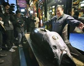 Kỷ lục cá ngừ Nhật Bản gần 300 kg giá 70 tỷ đồng