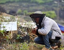 Nghề lạ ở Hà Giang: Nuôi ong trên đá