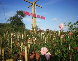 """Người đàn ông """"bỏ phố lên rừng"""" dựng nông trại hoa hồng"""
