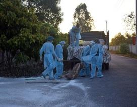 Quảng Bình: Tiêu hủy hơn 6 tấn lợn bị dịch tả châu Phi