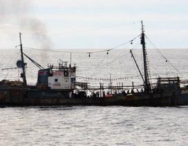 """""""Canh bạc"""" đánh bắt xa bờ của tàu cá Triều Tiên vì Trung Quốc cạnh tranh ngư trường"""