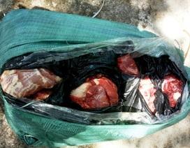 Xe khách vận chuyển gần nửa tấn thịt, xương, bì động vật ôi thiu