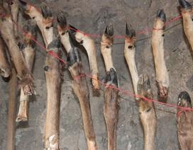 400.000 năm trước người cổ đại đã biết ăn tủy xương động vật