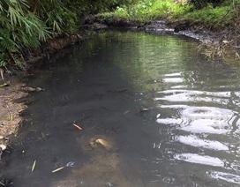 """Tổng Giám đốc Viwasupco nói """"không có độc trong nước sạch sông Đà"""""""