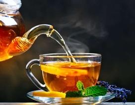 Uống trà thường xuyên có thể có lợi cho cấu trúc não bộ