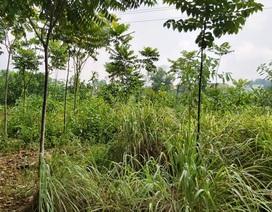 """Quy hoạch đất bị """"đổ nhầm mầu mực"""" tại Thanh Hoá: Do sai sót về nghiệp vụ!"""