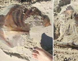 Sinh vật kỳ dị vùi trong cát trên bãi biển Australia
