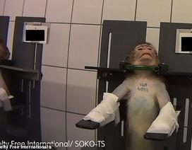 Những hình ảnh động vật gây sốc bên trong phòng thí nghiệm tại Đức