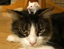 Mèo Kitys 69 của Calibra: Chú mèo công nghệ 4.0 - Giải pháp đuổi chuột hiệu quả