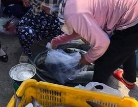 10.000 con cá bóp nuôi trên vùng biển Kiên Giang chết chưa rõ nguyên nhân