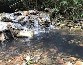 """Khủng hoảng Nước sạch Sông Đà: Dân có kiện cũng chỉ """"kiện củ khoai""""?"""