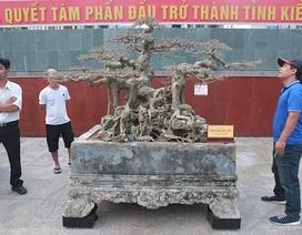 """Sanh """"Ngai vàng đất Việt"""" mua 10 triệu đồng, sau 15 năm trả vài tỷ không bán"""