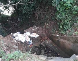 Hàng loạt bao tải lợn chết bị kẻ xấu đổ xuống mương thoát nước