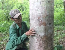 Từ chối hàng trăm triệu đồng, người đàn ông Vân Kiều quyết giữ rừng gỗ quý