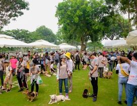 Bayer chung tay cùng cộng đồng lan toả tinh thần nuôi thú cưng có trách nhiệm