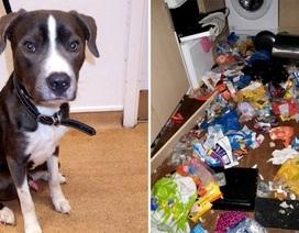 Chó ăn thịt mèo vì quá đói sau khi bị chủ bỏ lại ở nhà