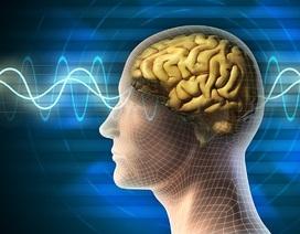 """Ứng dụng phát """"nhạc sóng não"""" giúp người nghe tập trung hơn trong công việc và học tập"""