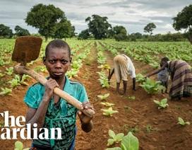 Lao động nô lệ trong các trang trại nông nghiệp ở châu Âu