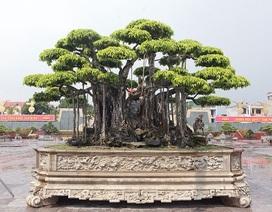 """Chi tới 460 tỷ đồng, khách Nhật vẫn """"chịu chết"""" không mua nổi """"siêu cây"""""""
