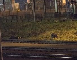 """Trò """"mèo vờn chuột"""" trong hành trình liều lĩnh của di dân vượt biên vào Anh"""