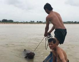 Phú Yên, Ninh Thuận hối hả phòng chống bão số 5