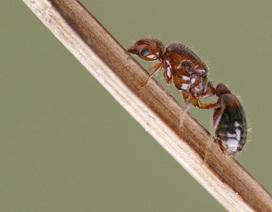 Nhật Bản có thể phải chi 6,42 tỷ USD mỗi năm đối phó kiến lửa độc