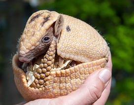 Một số động vật có thể tự tạm dừng… thai kỳ
