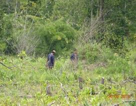 """Khởi tố trưởng ban quản lý rừng phòng hộ vì để """"mất rừng"""""""