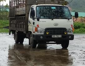 Bắt xe tải chở lợn cố tình vượt trạm kiểm dịch