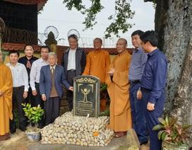 Cây thị 900 năm tuổi bên bến Bạch Đằng Giang được công nhận Cây Di sản
