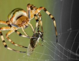 Băng keo hai mặt lấy cảm hứng từ mạng nhện có thể thay thế chỉ khâu phẫu thuật