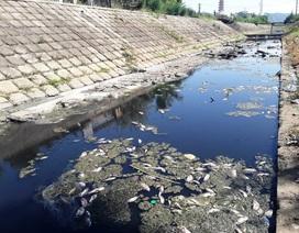 Máy ép bùn Công Ty TNHH Rotec Việt Nam: Quá tải trong xử lý chất thải là việc có thể kiểm soát