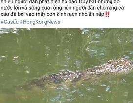 """Không xử phạt Facebook đăng tin """"cá sấu lớn nổi đầu trên sông"""""""