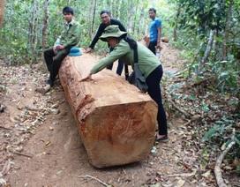 Cách tất cả chức vụ trong Đảng với chủ tịch xã đưa gỗ lậu về làm của riêng