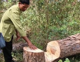 Một công an viên nhận tiền để làm ngơ việc phá rừng