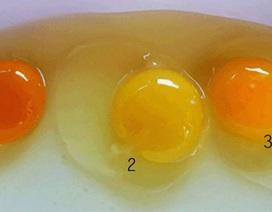 Lòng đỏ trứng gà có cho bạn biết gì về giá trị dinh dưỡng không?