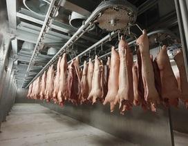 Thịt mát an toàn cho người tiêu dùng, tiến tới bỏ dần thịt nóng
