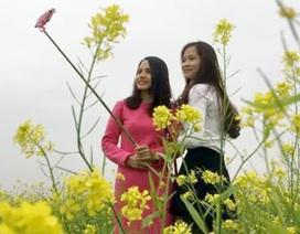 """Đoàn viên thanh niên xứ Thanh làm mô hình """"cánh đồng hoa cải"""" phát triển du lịch"""