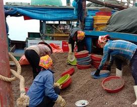 Trúng đậm sò nhám, chủ tàu thu hàng chục triệu đồng/ngày