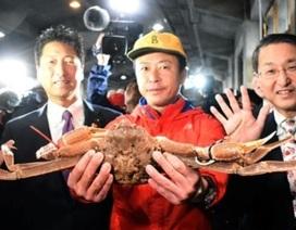 Hơn 1 tỷ đồng cho một con cua tuyết Nhật Bản