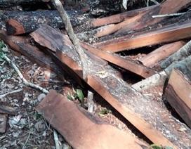 Vụ phá rừng di sản tại Quảng Bình: Bắt tạm giam nguyên trạm trưởng kiểm lâm