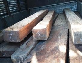Khởi tố 2 đối tượng chở gỗ lậu tông xe, hành hung lực lượng kiểm lâm