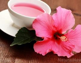 Bất ngờ với khả năng chữa ung thư của loài hoa mọc dại ở Việt Nam