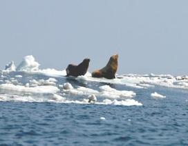 Sự lây lan của virus do băng biển Bắc cực tan?