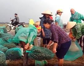 Nông dân đổ xô đi bắt ốc bươu vàng hại lúa, thu lợi hàng triệu đồng