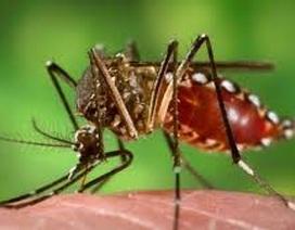50 người tử vong vì sốt xuất huyết, dịch tăng cao