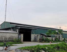"""Nhiều xưởng gỗ """"mọc"""" tràn lan trên đất nông nghiệp tại Hà Nam"""